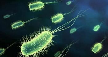Forcas antibiotik